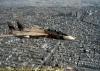 f14_iranian_0019