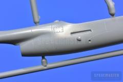 TT-1-Pinto-SPR_0682